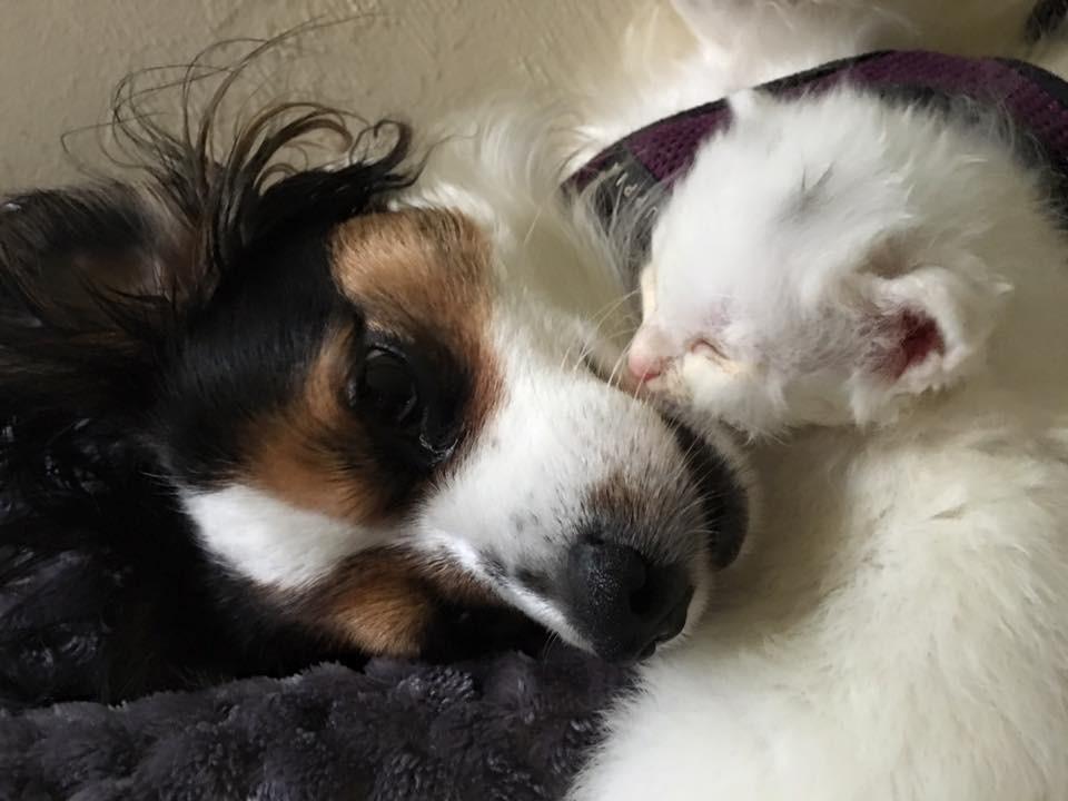 2隻小貓用身體「幫生病妹妹取暖」!現在健康模樣會萌到你心臟受不了❤