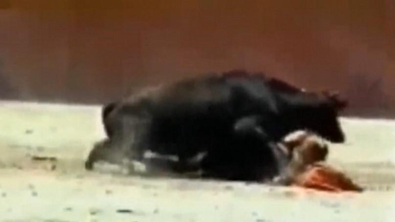 侏儒症女鬥牛士在過程中被牛「推倒硬上插入」,過程嚇壞了所有觀眾...