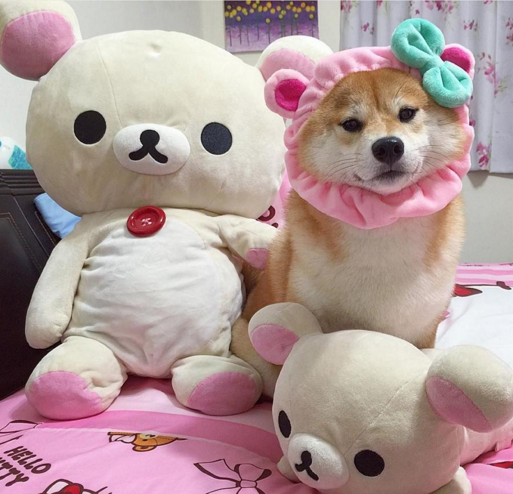 超有名「無臉男柴犬」變超大瓶「蘋狗西打」,其他Cosplay懶懶熊造型超可愛。