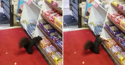商店驚見「神秘巧克力大盜」,正妹老闆女兒無奈:「慣犯,5年來已損失40多條!」