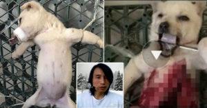 中國人渣「變態直播解剖活狗」叫聲淒慘心碎,狠嗆「還有更痛苦的」但無罪!(非趣味+影片慎入)