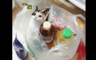 買東西驚見「憑空多出一罐貓」,全網路搶問:「哪間超市!」