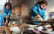 16年救「6000隻流浪貓狗」,54歲老闆娘放棄事業:「只想給他們一個溫暖的家。」