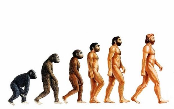 盲腸不是廢物「有重要功能」!它從猿人到人類一直沒有消失「因為很重要」!
