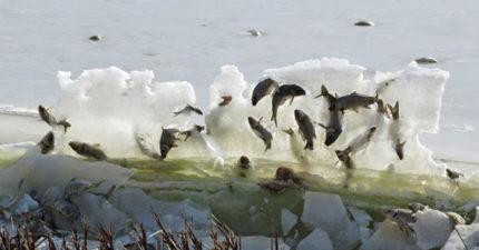 她在湖邊驚見「魚冰牆」,超神奇震驚全球!