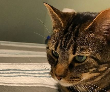 貓奴花600塊在網路上「買貓咪玩具」,貨到貓咪看到真實大小「他喵的」主人這下GG了...