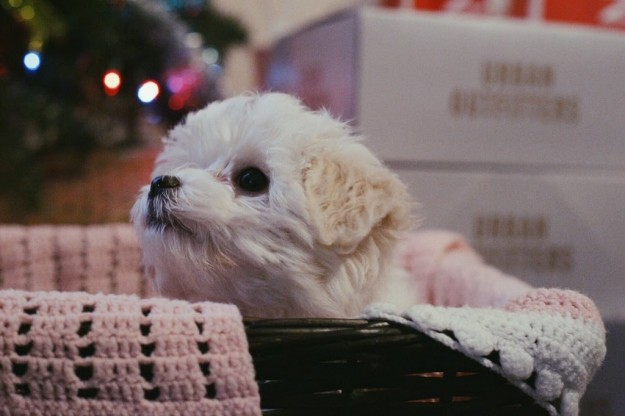 狗狗聽到主人難過哭「主動跑去咬衛生紙」網路感動到爆,網友紛紛PO照「這是狗狗基本功能」!