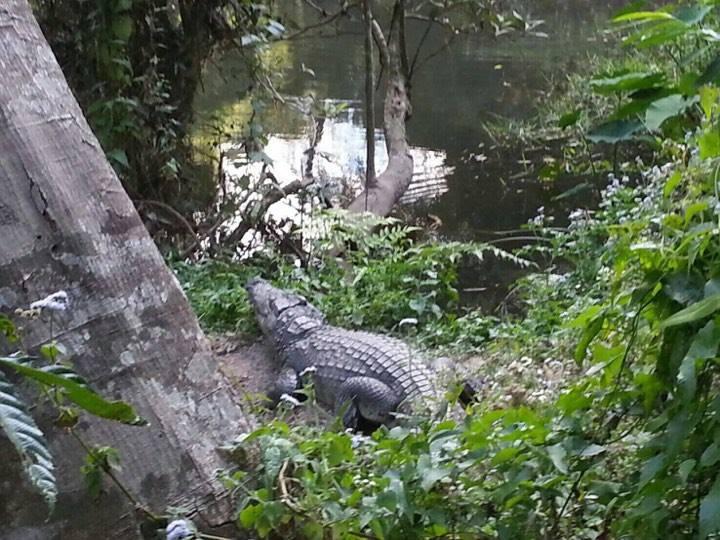 白目女遊客不怕死「硬要跟巨鱷自拍」,下一秒「慘遭狠咬不放」!