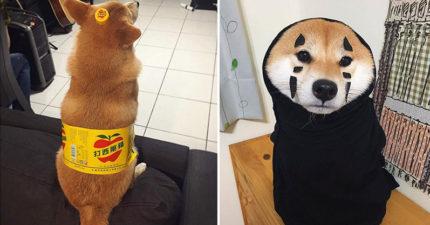 超有名「無臉男柴犬」變超大瓶「蘋狗西打」,懶懶熊造型超可愛。網友:「我要買兩打!」