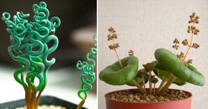 10種「從外星球過來」的超亂來居家植物。#6澎湖也有長!