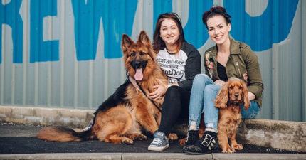 世上最佛心公司「只要領養狗狗」可得一週「育犬假」!50隻狗狗一起上班環境超萌!