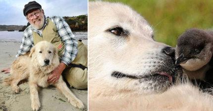 傳奇狗狗「用自己力量拯救小藍企鵝種族」高齡105歲去世,故事感人到拍成電影!