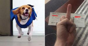 他目睹「惡女放任狗狗大便在機場不清理」提醒還被翻白眼,他:「請問妳是要去倫敦」讓她機票報廢!