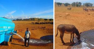 他冒生命危險每天開幾小時「載1萬公升水」到乾旱區,拯救500頭水牛「他們低頭感謝他」!