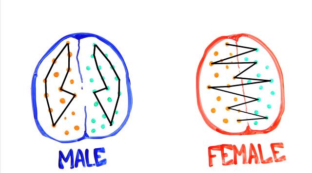 「男生大腦大13%」,但女生有個男生無法相比的大優勢!