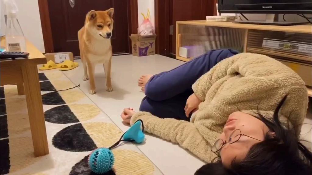 主人過世後遺體「多久才會被寵物吃掉」?醫護曝案例惹哭網友