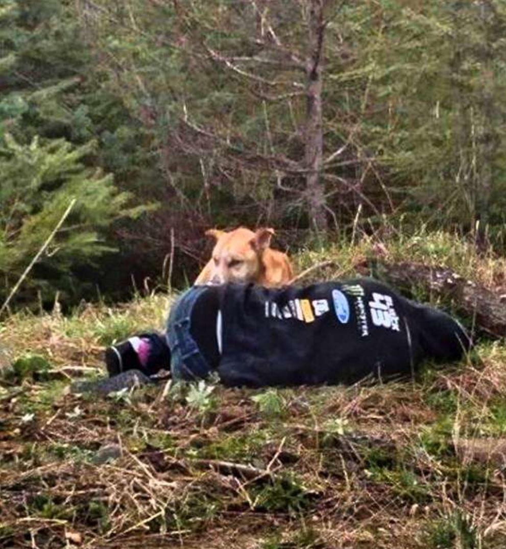 對人類有敵意狗狗不肯讓人類接近,她「假裝昏倒」狗狗靠近後反應「人類不值得狗狗的愛!