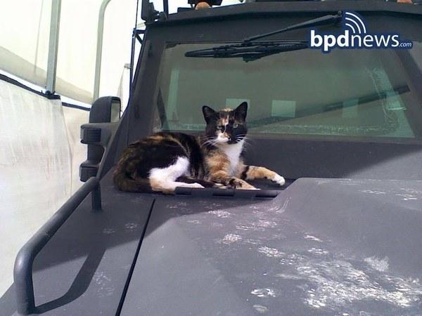 流浪貓大搖大擺到警局作客,超暖心警察「蓋雙層豪華小屋」將他寵到走不了!(6張)