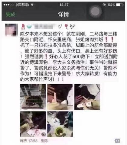 中國餐廳「殘忍砍斷狗狗四肢」狠丟髒地,他們砸錢救援「蒐證報警」但無罪!(非趣味)