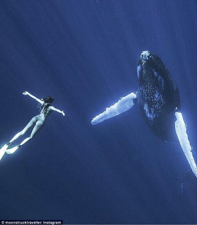 哈佛法律高材美女環遊世界與大自然互動「比迪士尼還童話」,跟鯨魚、鯊魚一起游泳夢幻到廠商都搶她!