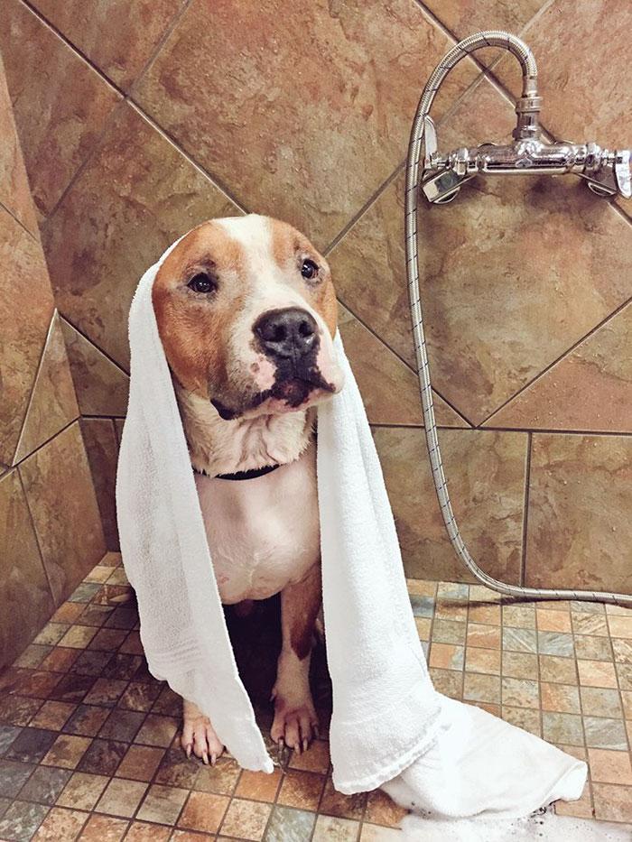 狗狗「瘦到快死」尾巴和耳朵沒毛,被認養後「每天緊靠報答」萌翻網路!