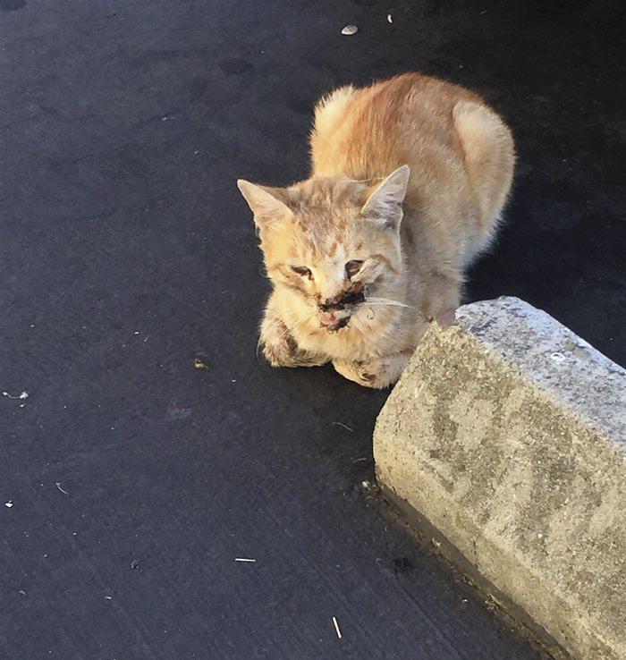 貓咪被車撞「螺絲釘狠穿下巴」痛苦潰爛,18萬拯救後「原本模樣」會讓你開心到爆!