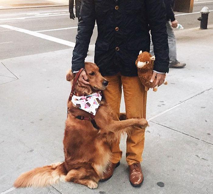 3年前主人失戀後愛犬就開始牽他手 現在狗狗習慣「每天緊緊擁抱路人」讓他們淚崩!