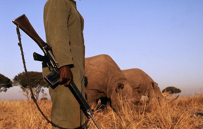 這座國家公園「只獵殺人類」不獵殺犀牛。已殺50人網友大喊:「正義」!