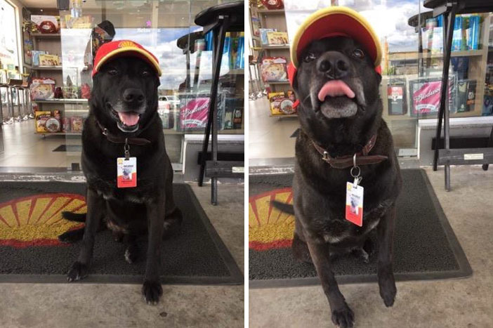 狗狗被遺棄一直悲鳴等主人回來,現在變「最萌加油站員工」戴著棒球帽傻氣笑容會讓你嘴角上揚!