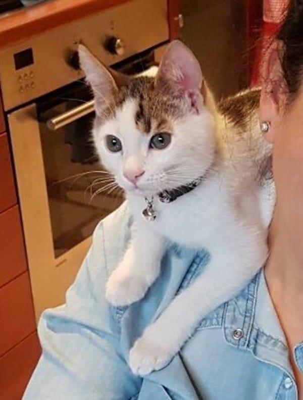 她在垃圾場聽見喵喵聲,「將小奶貓撿回家」才發現他是3000分之1的奇蹟!(6張)
