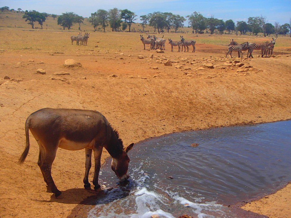 """Mwalua is literally saving the lives of the wild animals living in the park. """"There is completely no water, so the animals are depending on humans,"""" Mwalua tells The Dodo. """"If we don't help them, they will die."""""""