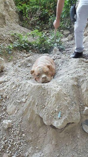 一人一狗拚命挖拯救她!前主人把「脖子綁著裝滿石頭的麻袋」確保她不能逃走!