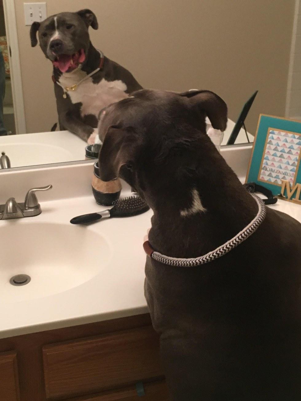 狗狗知道自己被家人拋棄「在收容所悲傷流淚」,新主人「三顧茅廬」他才回應手伸出來!