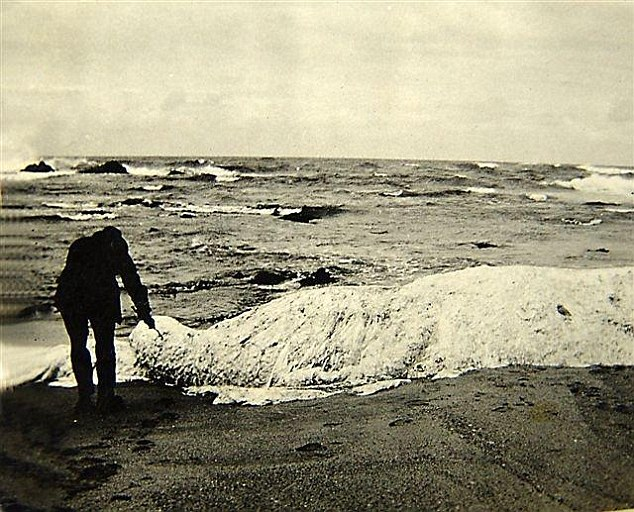 A supposed half-whale half-polar bear creature washed up in Margate, South Africa, on 25 October 1924, and was nicknamed Trunko