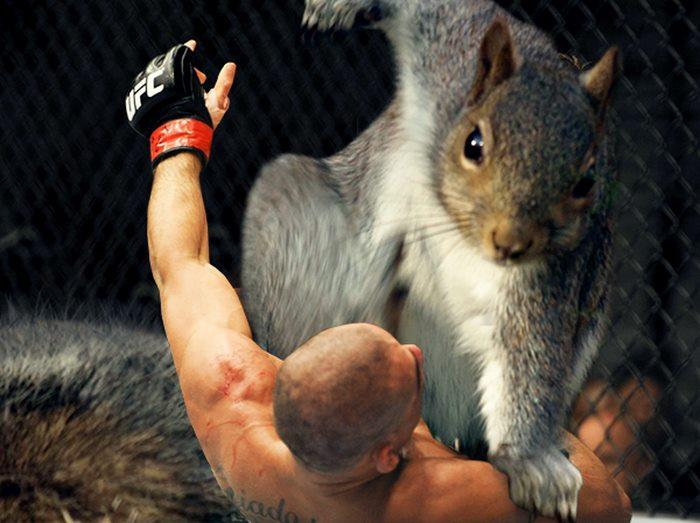 34張「松鼠太霸氣」被P圖成超級英雄的帥氣照片!#7《星際異攻隊》亂入超適合!