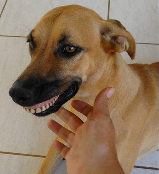 狗狗愛亂挖東西講不聽 「咧嘴一笑炫耀」讓主人笑到岔氣!