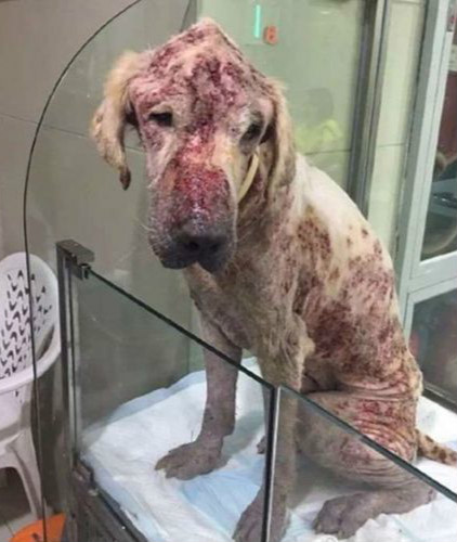 狗狗被夫妻「領養」後以為找到幸福新家,但8個月後「快認不出來模樣」讓人心碎死...(非趣味)