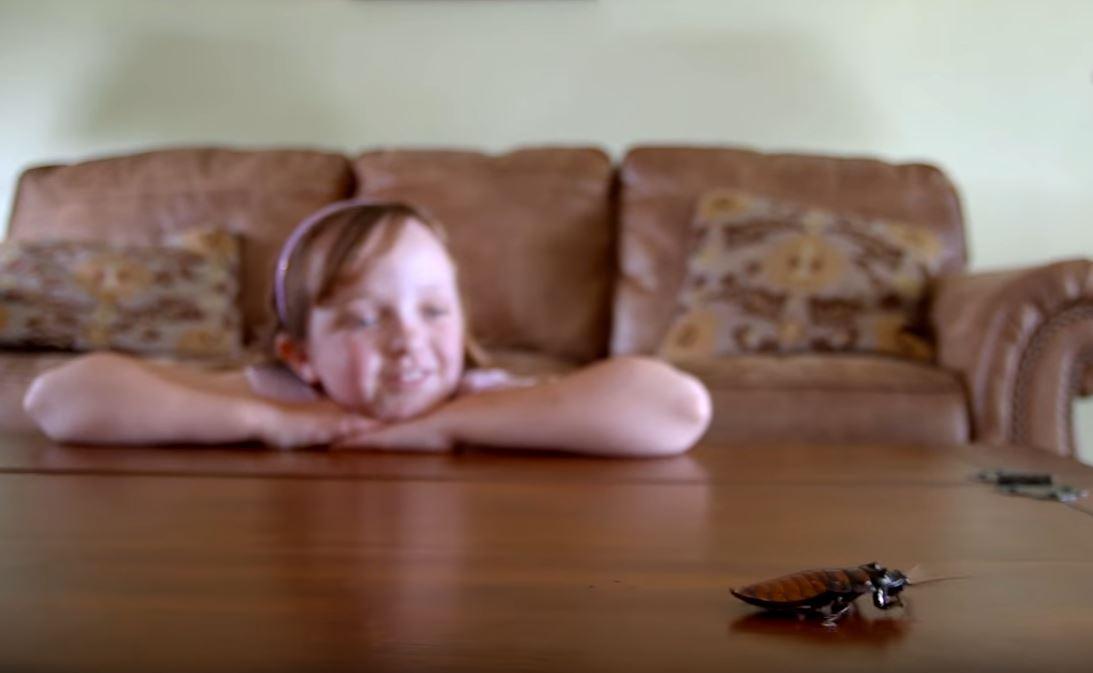 9歲女童養「7000隻活生生蟑螂」最喜歡「爬滿身上」超爽!00:35被子翻開嚇到尿!(影片)