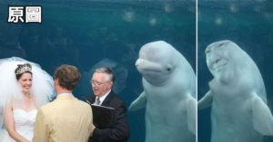 30張「白鯨」見證婚禮激發了網友們的「修圖大戰」照片!