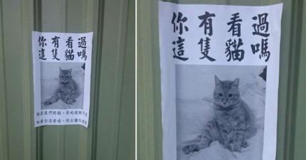 路邊發現公告「你看過這隻貓嗎?」,他好心想幫忙找上前一看「拳頭秒硬」!