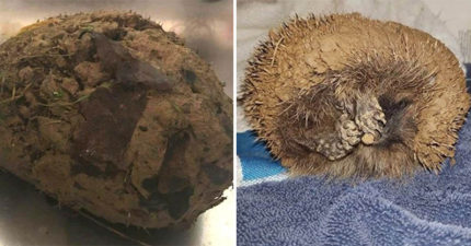 他發現狗狗在玩的「泥球」竟然「有呼吸聲」 獸醫把超級萌物救了出來!