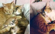 「通常不在乎孩子」貓爸在貓媽「產後」溫馨照顧家庭,#7戒備保護家人網友心都蒸發了!(8張)