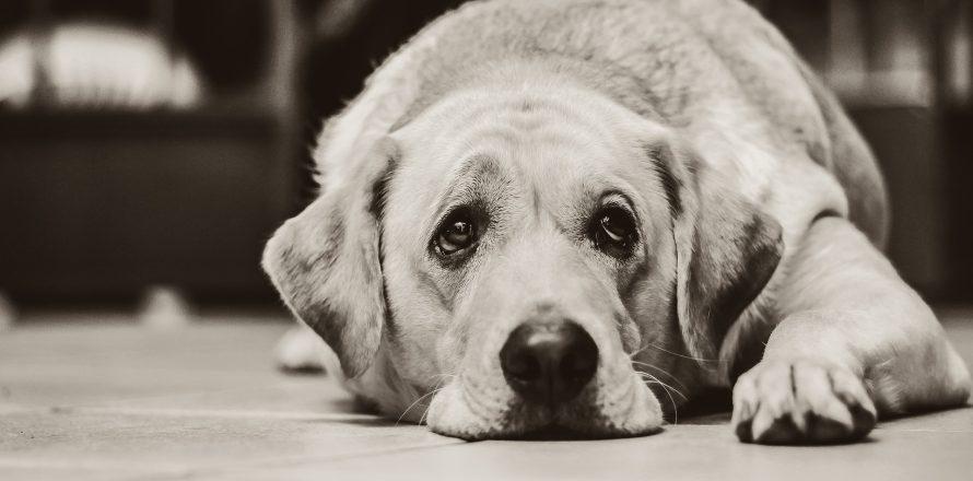最新研究:6位獸醫就有1位想自殺,獸醫的「共同特質」太致命!