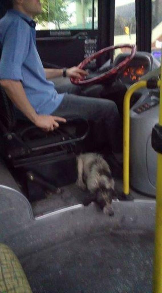 司機在暴風雨中霸氣無視公司規定,將2隻狗狗「接上車」讓乘客一起幫忙找主人!