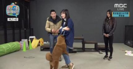 雪炫帶狗狗上節目,珉娥被狗狗「一直上」主人只有在一旁「看很爽」。(影片)