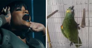 鸚鵡超清晰美聲唱「蕾哈娜」歌曲還抖音,公認可以把蕾哈娜「狠狠取代」了! (影片)