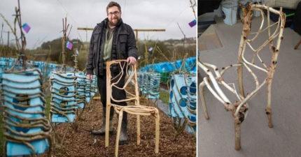 正常傢俱太遜了!他花10年「種出」一張要10萬的椅子?!400張全搶光「椅園」畫面超驚奇!