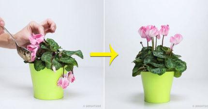 3樣每人家都有最能讓「快死植物」起死回生的萬用肥料。