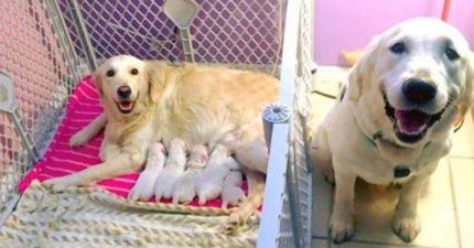 黃金列犬一家開心迎接「新成員」,超可愛照在網路上萌爆7萬網友!