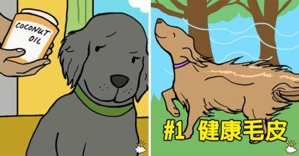 9個為什麼你應該「餵狗狗吃椰子油」的完美理由 還能幫助減重!
